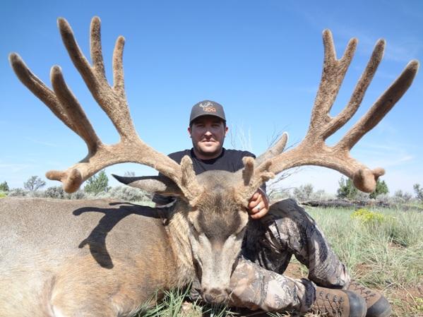 2016 Mule Deer Winner